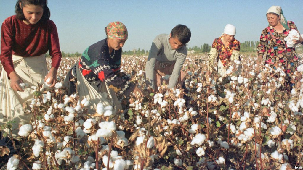 Uzbekistan Cotton Picking